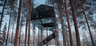 Sweden's Sanctuary in The Trees