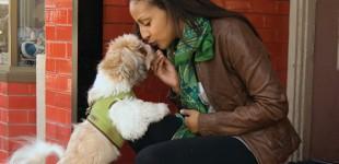 Street Pulse: Dogs